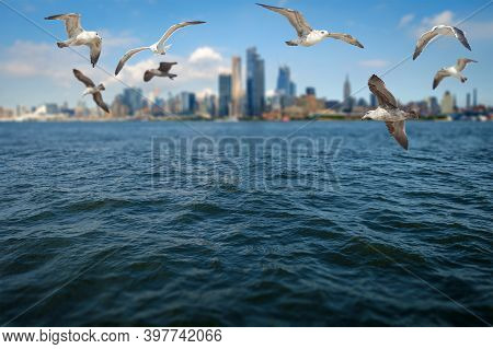 Seagulls Flying In Front Of Beautiful New York City Skyline