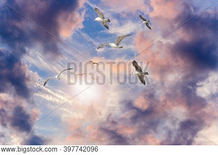 Seagulls Flying High Up In The Beautiful Colorful Cloudy Sky