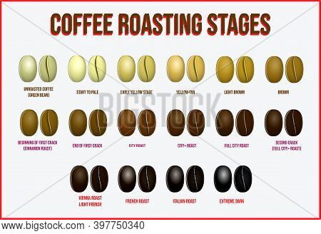 Set Of Coffee Beans Realistic Or Various Stage Of Roasting Coffee Beans From The Green Beans Through