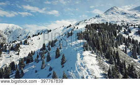 Snow Forest In The Mountains, Above The Clouds. View From Above, From The Drone. Coniferous Trees Ar