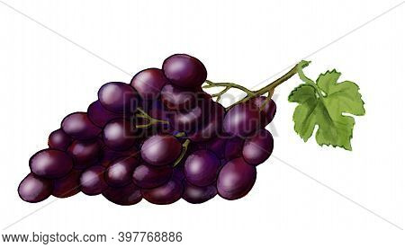 Purple Grape With Green Leaf. Hand Drawn Digital Illustration Isolated On White Background. Good Ele