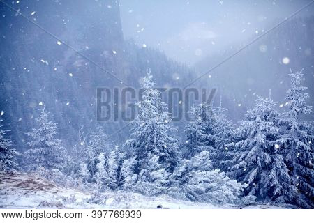 Christmas and New Year background with winter trees in mountains covered with fresh snow - Magic holiday background