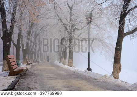 Trees In Mist On A Frosty Morning. Wonderful Urban Scenery In Wintertime. Location Linden Alley On T