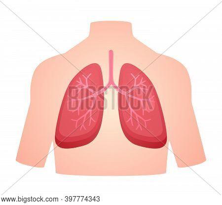 Human Anatomy Organ Lung Pulmonary Breath Respiratory System White Isolated Background Flat Style