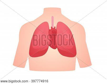 Human Anatomy Organ Lung Heart Pulmonary Cardiac Isolated Background Flat Style