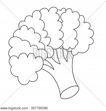 Broccoli. Inflorescence Of Asparagus Cabbage. Vector Illustration. Outline On An Isolated White Back