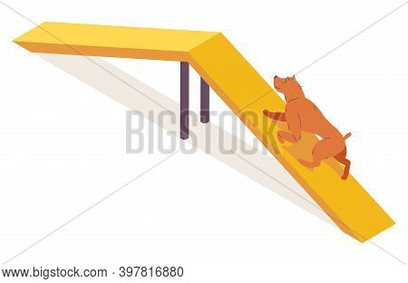 Isometric Dog Climbing On Camel Hump Agility Equipment. Ginger Puppy Character Isolated On White.