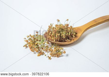Dried Linden Tree On A White Background. A Bunch Of Dried Linden On A Wooden Spoon. Healing Herbs.