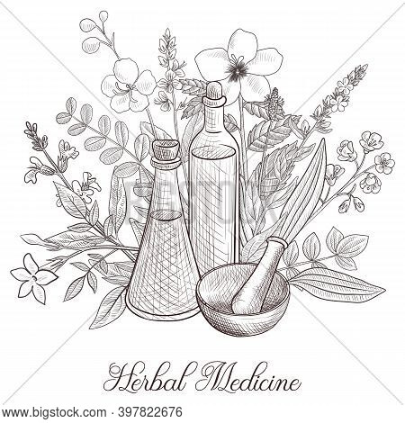 Vector Drawing Medicinal Plants, Bottle, Mortar And Pestle At White Background, Hand Drawn Illustrat