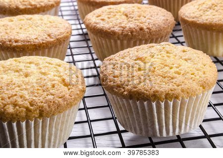 Freshly Baked Cupcake On A Cooking Rack