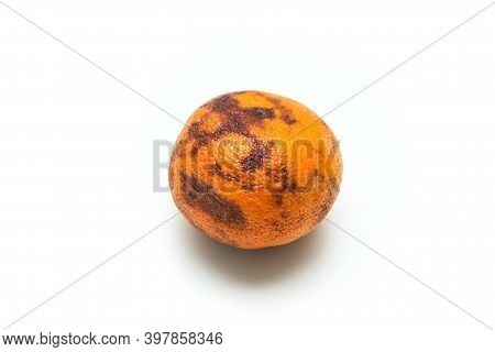 A Picture Of An Ordinary Old And Dry Mandarin. It Has A Quite Dry Pulp Inside. Not Very Good To Eat.