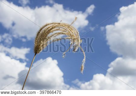 Concept Of Countryside With Cloudy And Bright Blue Sky
