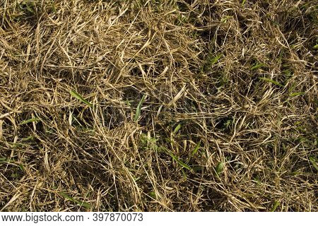 Close-up Of Dry Grass And Fresh Green Grass Mixed