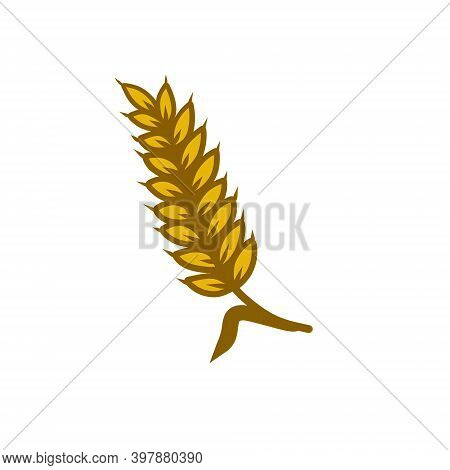 Ear Of Wheat. Golden Stem Of The Plant. Grains And Farm Products. Harvest. Seeding And Yield. Cartoo