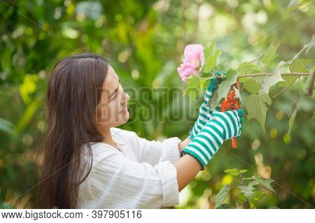 Asian Woman Cutting A Blooming Branch Of Peach Tree With Pruning Scissors, Hobbies And Leisure, Home