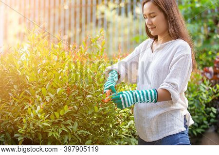 Asian Woman Cutting Branches Of Peach Tree With Pruning Scissors, Hobbies And Leisure, Home Gardenin