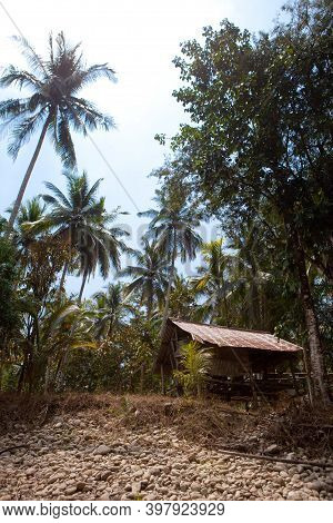 Very Old Ruined Hut In A Palm Forest In Thailand