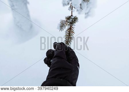 Hand reaching out to a snowy tree in Riisitunturi National Park, Finland
