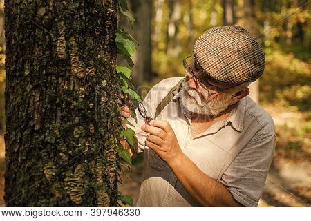 Old Man Scientist. Botanist Examine Plants. Bearded Grandfather In Forest. Curiosity To Botany. Pick