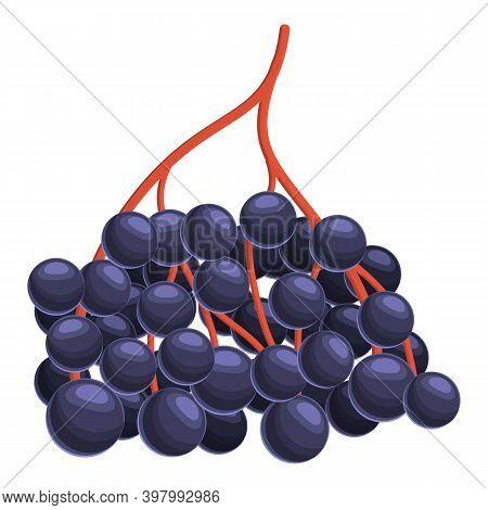 Ripe Elderberry Icon. Cartoon Of Ripe Elderberry Vector Icon For Web Design Isolated On White Backgr