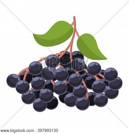 Juicy Elderberry Icon. Cartoon Of Juicy Elderberry Vector Icon For Web Design Isolated On White Back