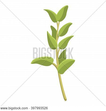 Thyme Culinary Icon. Cartoon Of Thyme Culinary Vector Icon For Web Design Isolated On White Backgrou