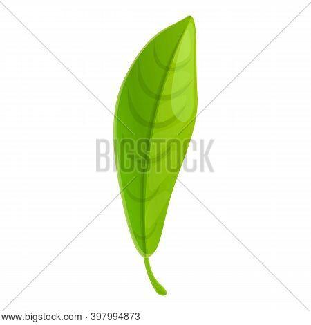 Bergamot Long Leaf Icon. Cartoon Of Bergamot Long Leaf Vector Icon For Web Design Isolated On White