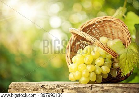 Fresh Bunch Of Juicy Grapes Rotate On A White Background. Ripe Juicy Grapes Rotate On A Plate. Close