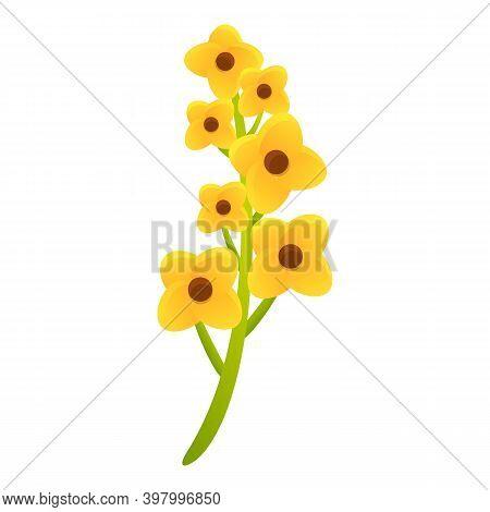 Canola Eco Plant Icon. Cartoon Of Canola Eco Plant Vector Icon For Web Design Isolated On White Back