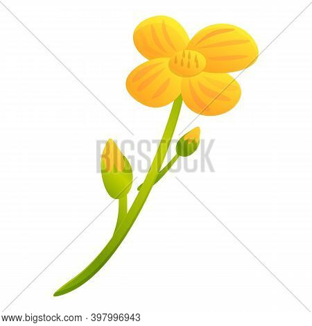Canola Yellow Flower Icon. Cartoon Of Canola Yellow Flower Vector Icon For Web Design Isolated On Wh