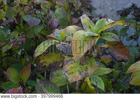Withered Leaves In Autumn 2