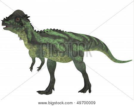 Pachycephalosaurus On White