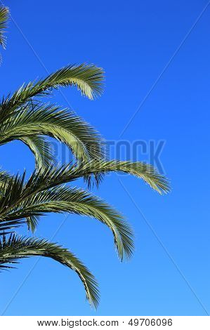 Green Palm Fronds Against A Blue Sky