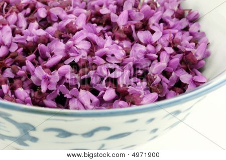 Closeup Of Redbud Blossoms In A Porcelain Bowl