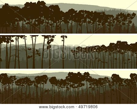 Horizontal Banners Of Coniferous Pinewood.