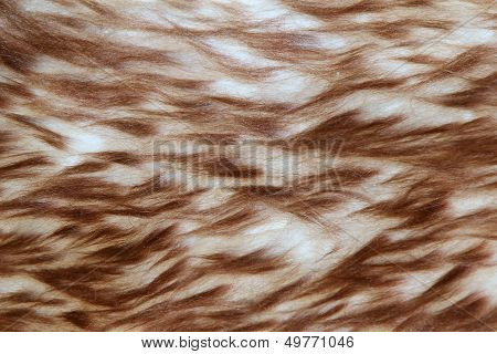 Sheepskin fur background