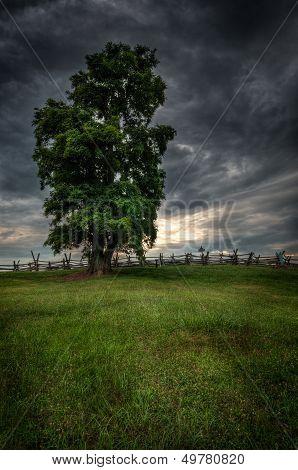 Tree On Bloody Lane