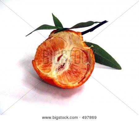 Opened Tangerine