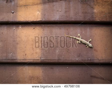 Lizard Perched On Wood Wall