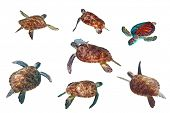 Sea turtles isolated over white poster