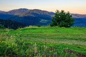wild herbs and a tree on a green meadow in mountains poster