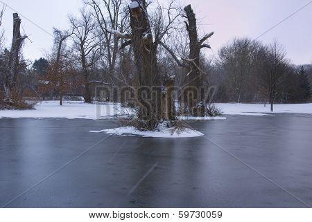 Tree Stumps In Frozen Swamp