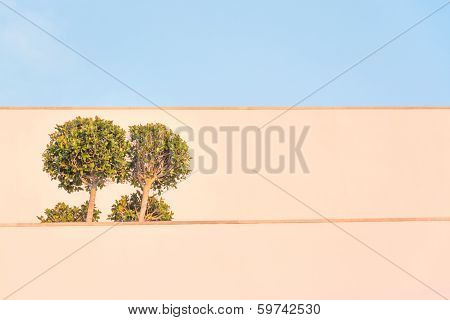 Ficus Tree Building