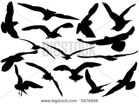 Flying sea-gulls vector illustration