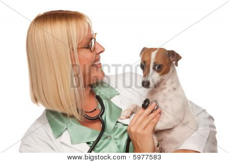 Attractive Female Doctor Veterinarian with Small Puppy Isolated on a White Background. poster