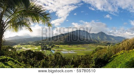 Hanalei Valley From Princeville Overlook Kauai