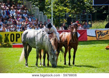 Horse Whisperer In Strzegom At Hsbc Fei World Cup 2009