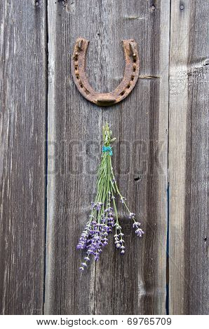 Bunch Of Lavender Hanging Old Wooden Wall And Rusty Horseshoe