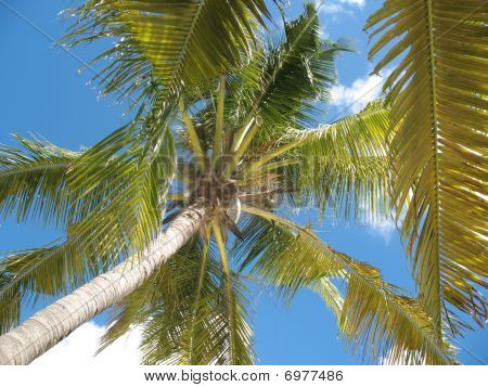 Palm Tree With Blue Skyjpg