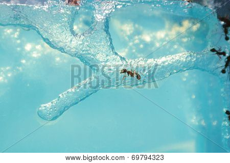 Ant Farm with clear gel to see ants poster